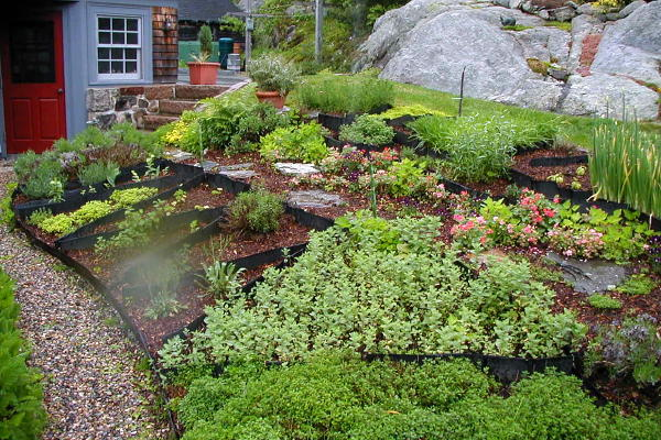 Lawn alternatives field notes for Small garden on a slope designs